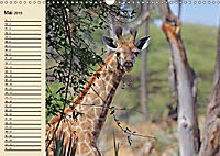 Wildes Leben in Botswana (Wandkalender 2019 DIN A3 quer) - Produktdetailbild 5