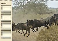 Wildes Leben in Botswana (Wandkalender 2019 DIN A3 quer) - Produktdetailbild 6