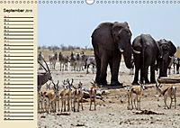 Wildes Leben in Botswana (Wandkalender 2019 DIN A3 quer) - Produktdetailbild 9