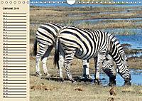 Wildes Leben in Botswana (Wandkalender 2019 DIN A4 quer) - Produktdetailbild 1