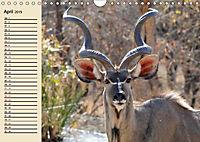 Wildes Leben in Botswana (Wandkalender 2019 DIN A4 quer) - Produktdetailbild 4