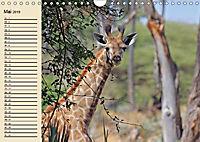 Wildes Leben in Botswana (Wandkalender 2019 DIN A4 quer) - Produktdetailbild 5
