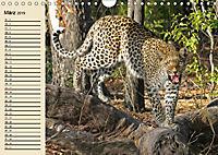 Wildes Leben in Botswana (Wandkalender 2019 DIN A4 quer) - Produktdetailbild 3