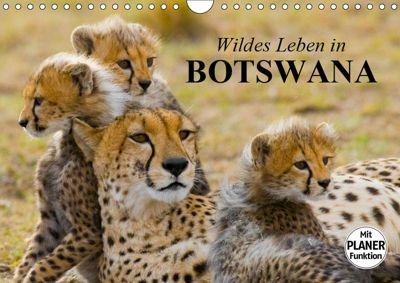 Wildes Leben in Botswana (Wandkalender 2019 DIN A4 quer), Elisabeth Stanzer