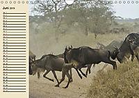 Wildes Leben in Botswana (Wandkalender 2019 DIN A4 quer) - Produktdetailbild 6