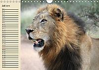 Wildes Leben in Botswana (Wandkalender 2019 DIN A4 quer) - Produktdetailbild 7