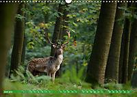 Wildes NRW - Beeindruckende Tierwelt (Wandkalender 2019 DIN A3 quer) - Produktdetailbild 6