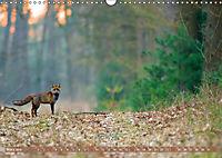 Wildes NRW - Beeindruckende Tierwelt (Wandkalender 2019 DIN A3 quer) - Produktdetailbild 3