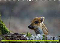 Wildes NRW - Beeindruckende Tierwelt (Wandkalender 2019 DIN A3 quer) - Produktdetailbild 2