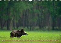 Wildes NRW - Beeindruckende Tierwelt (Wandkalender 2019 DIN A3 quer) - Produktdetailbild 5