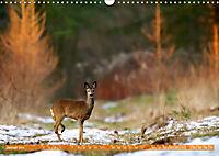 Wildes NRW - Beeindruckende Tierwelt (Wandkalender 2019 DIN A3 quer) - Produktdetailbild 1