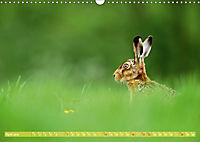 Wildes NRW - Beeindruckende Tierwelt (Wandkalender 2019 DIN A3 quer) - Produktdetailbild 4