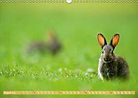 Wildes NRW - Beeindruckende Tierwelt (Wandkalender 2019 DIN A3 quer) - Produktdetailbild 8