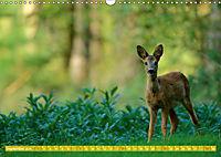 Wildes NRW - Beeindruckende Tierwelt (Wandkalender 2019 DIN A3 quer) - Produktdetailbild 9