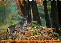 Wildes NRW - Beeindruckende Tierwelt (Wandkalender 2019 DIN A3 quer) - Produktdetailbild 10