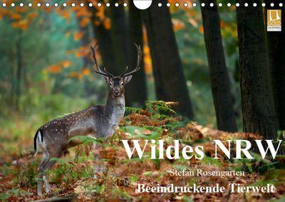 Wildes NRW - Beeindruckende Tierwelt (Wandkalender 2019 DIN A4 quer), Stefan Rosengarten