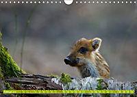 Wildes NRW - Beeindruckende Tierwelt (Wandkalender 2019 DIN A4 quer) - Produktdetailbild 2
