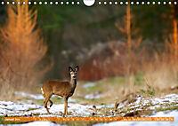 Wildes NRW - Beeindruckende Tierwelt (Wandkalender 2019 DIN A4 quer) - Produktdetailbild 1