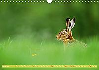 Wildes NRW - Beeindruckende Tierwelt (Wandkalender 2019 DIN A4 quer) - Produktdetailbild 4