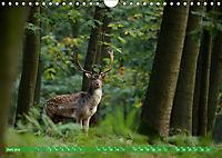 Wildes NRW - Beeindruckende Tierwelt (Wandkalender 2019 DIN A4 quer) - Produktdetailbild 6