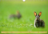 Wildes NRW - Beeindruckende Tierwelt (Wandkalender 2019 DIN A4 quer) - Produktdetailbild 8