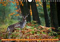 Wildes NRW - Beeindruckende Tierwelt (Wandkalender 2019 DIN A4 quer) - Produktdetailbild 10