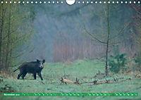 Wildes NRW - Beeindruckende Tierwelt (Wandkalender 2019 DIN A4 quer) - Produktdetailbild 11