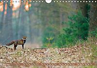 Wildes NRW - Beeindruckende Tierwelt (Wandkalender 2019 DIN A4 quer) - Produktdetailbild 3