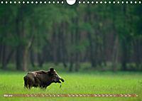 Wildes NRW - Beeindruckende Tierwelt (Wandkalender 2019 DIN A4 quer) - Produktdetailbild 5