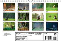 Wildes NRW - Beeindruckende Tierwelt (Wandkalender 2019 DIN A4 quer) - Produktdetailbild 13