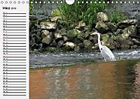 Wildes Wasser (Wandkalender 2019 DIN A4 quer) - Produktdetailbild 3