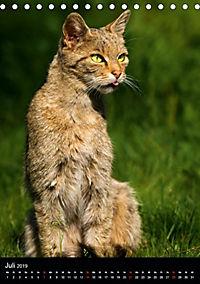 Wildkatzen - scheue Jäger (Tischkalender 2019 DIN A5 hoch) - Produktdetailbild 10