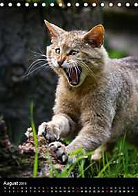 Wildkatzen - scheue Jäger (Tischkalender 2019 DIN A5 hoch) - Produktdetailbild 8