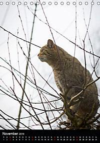 Wildkatzen - scheue Jäger (Tischkalender 2019 DIN A5 hoch) - Produktdetailbild 11