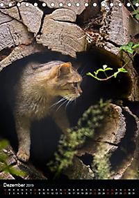 Wildkatzen - scheue Jäger (Tischkalender 2019 DIN A5 hoch) - Produktdetailbild 12