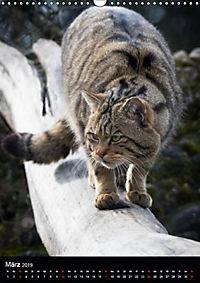 Wildkatzen - scheue Jäger (Wandkalender 2019 DIN A3 hoch) - Produktdetailbild 2