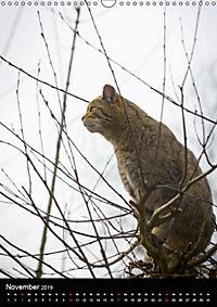Wildkatzen - scheue Jäger (Wandkalender 2019 DIN A3 hoch) - Produktdetailbild 6