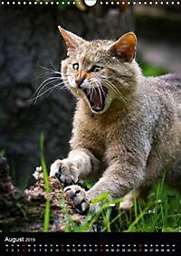 Wildkatzen - scheue Jäger (Wandkalender 2019 DIN A3 hoch) - Produktdetailbild 7