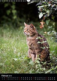 Wildkatzen - scheue Jäger (Wandkalender 2019 DIN A3 hoch) - Produktdetailbild 5