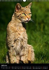 Wildkatzen - scheue Jäger (Wandkalender 2019 DIN A3 hoch) - Produktdetailbild 11