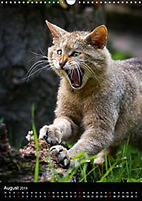 Wildkatzen - scheue Jäger (Wandkalender 2019 DIN A3 hoch) - Produktdetailbild 8