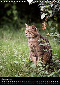 Wildkatzen - scheue Jäger (Wandkalender 2019 DIN A4 hoch) - Produktdetailbild 2