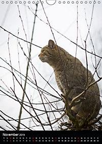 Wildkatzen - scheue Jäger (Wandkalender 2019 DIN A4 hoch) - Produktdetailbild 11