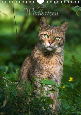 Wildkatzen - scheue Jäger (Wandkalender 2019 DIN A4 hoch), Cloudtail the Snow Leopard