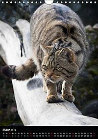 Wildkatzen - scheue Jäger (Wandkalender 2019 DIN A4 hoch) - Produktdetailbild 3