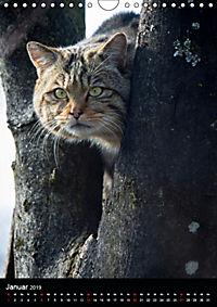Wildkatzen - scheue Jäger (Wandkalender 2019 DIN A4 hoch) - Produktdetailbild 1