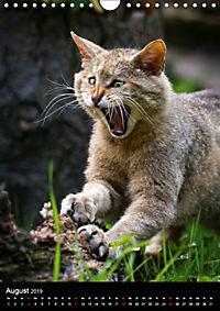 Wildkatzen - scheue Jäger (Wandkalender 2019 DIN A4 hoch) - Produktdetailbild 8