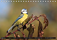 Wildlebende Vögel in Südhessen (Tischkalender 2019 DIN A5 quer) - Produktdetailbild 3