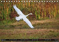 Wildlebende Vögel in Südhessen (Tischkalender 2019 DIN A5 quer) - Produktdetailbild 4