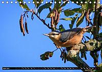Wildlebende Vögel in Südhessen (Tischkalender 2019 DIN A5 quer) - Produktdetailbild 6
